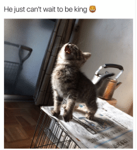 Disney, Funny, and Reddit: He just can't wait to be king I would absolutely watch this. GET ON THIS DISNEY (@reddit)