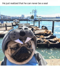 He just realized that he can never be a seal So sad 😭 tag a friend