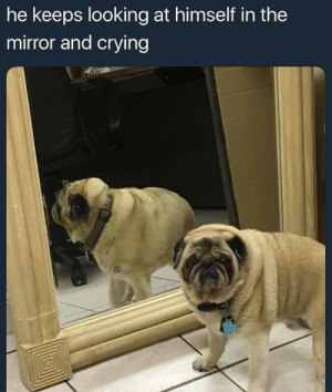 Crying, Dank, and Memes: he keeps looking at himself in the  mirror and crying me_irl by pixelunit MORE MEMES