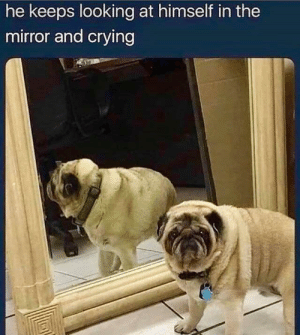 Crying, Mirror, and Irl: he keeps looking at himself in the  mirror and crying me irl