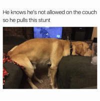 checkmate hooman (thx 4 following @chaos.reigns_👈): He knows he's not allowed on the couch  so he pulls this stunt checkmate hooman (thx 4 following @chaos.reigns_👈)