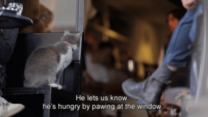 Pawing: He lets us know  he's hungry by pawing at the window.