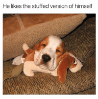 Dogs, Funny, and Memes: He likes the stuffed version of himself Too much cuteness in one pic. @dogsbeingbasic has amazing dogs memes