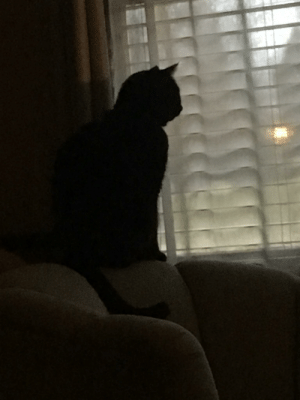 He likes to sit on the back of chairs and stare outside at animals sometimes: He likes to sit on the back of chairs and stare outside at animals sometimes