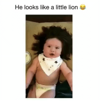 Cute, Memes, and Hair: He looks like a little liorn cute! (Real hair or no?)😂 👉🏻(@bestvideos cute) Credit: @big_hair_baby_theo