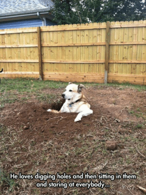 digging: He loves digging holes and then sitting in them