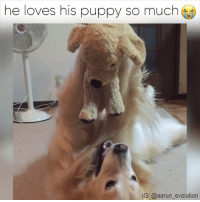 Too Cute!: he loves his puppy so much  IG: @aarun evolution Too Cute!