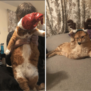 Fat, May, and Reindeer: He may be fat but he's not jolly, his reindeer is none too pleased either