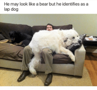 😂Damn: He may look like a bear but he identifies as a  lap dog 😂Damn