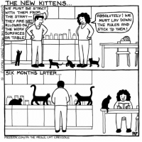 Cats, Lay's, and Memes: HE NEW KITTENS.  RWE MUST BE STRICT  WITH THEM FROM  THE START  THEY ARE NOT  ALLOWED ON  THE WORK  SURFACES  OR TABLE  ISIX MONTHS LATER...  FACEBOOK.  ON THE PROWL CAT CARTOONS  ABSOLUTELY WE  MUST LAY DOWN  THE RULES AND  STICK TO THEM! The New Arrivals... #Cats #Ontheprowl #Rupertfawcett