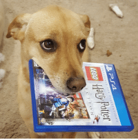 """<p><a href=""""http://daily-harrypotter-world.tumblr.com/post/152030484334/ps4-remaster-of-lego-harry-potter-arrived-today"""" class=""""tumblr_blog"""">daily-harrypotter-world</a>:</p>  <blockquote><p>PS4 remaster of LEGO Harry Potter arrived today. My house elf can't wait to try it!</p></blockquote>: He Palle  ly Polter  REMASTERED FOR PLAYSTATION  Ha!  8  E CTIO N  2 CLASSIC GAMES ON 1 DISC <p><a href=""""http://daily-harrypotter-world.tumblr.com/post/152030484334/ps4-remaster-of-lego-harry-potter-arrived-today"""" class=""""tumblr_blog"""">daily-harrypotter-world</a>:</p>  <blockquote><p>PS4 remaster of LEGO Harry Potter arrived today. My house elf can't wait to try it!</p></blockquote>"""