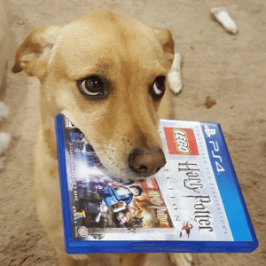 daily-harrypotter-world:  PS4 remaster of LEGO Harry Potter arrived today. My house elf can't wait to try it!: He Palle  ly Polter  REMASTERED FOR PLAYSTATION  Ha!  8  E CTIO N  2 CLASSIC GAMES ON 1 DISC daily-harrypotter-world:  PS4 remaster of LEGO Harry Potter arrived today. My house elf can't wait to try it!