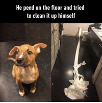 """<p><a href=""""https://libertarirynn.tumblr.com/post/154057885514/responsible-af-1010-good-doggo"""" class=""""tumblr_blog"""">libertarirynn</a>:</p>  <blockquote><p>Responsible af. 10/10, good doggo.</p></blockquote>  <p>I run a political blog with 10k+ followers and somehow this is one of my most popular posts ever, being shared in Buzzfeed articles and viral FB posts 😂</p>: He peed on the floor and tried  to clean it up himself <p><a href=""""https://libertarirynn.tumblr.com/post/154057885514/responsible-af-1010-good-doggo"""" class=""""tumblr_blog"""">libertarirynn</a>:</p>  <blockquote><p>Responsible af. 10/10, good doggo.</p></blockquote>  <p>I run a political blog with 10k+ followers and somehow this is one of my most popular posts ever, being shared in Buzzfeed articles and viral FB posts 😂</p>"""