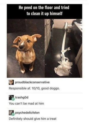 Good doggo: He peed on the floor and tried  to clean it up himself  proudblackconservative  Responsible af. 10/10, good doggo.  trashgOd  You can't be mad at him  psychedelicfelon  Definitely should give him a treat Good doggo