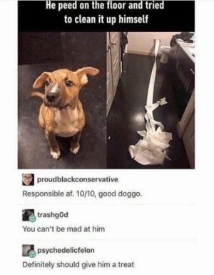 At least he tried.: He peed on the floor and tried  to clean it up himself  proudblackconservative  Responsible af. 10/10, good doggo.  trashgod  You can't be mad at him  psychedelicfelon  Definitely should give him a treat At least he tried.