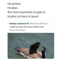 Memes, Uber, and 🤖: He protecc  He attac  But most importantly he gets to  location on bacc of quacc  Natalya Lobanova @NatalyaLobanova  i need to know the story behind this  Show this thread Your Uber is here 🦆🐈