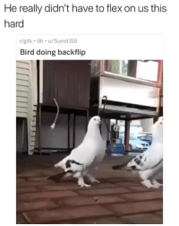 Flexing, Memes, and Gifs: He really didn't have to flex on us this  hard  /gifs 6h u/Sumit316  Bird doing backflip