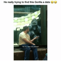 """Funny, Twitter, and Date: He really trying to find this Gorilla a date  """"Eh no, next one please"""" What 😂😂 👉🏽(via: sierra_2015-twitter)"""