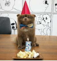 Birthday, Old, and Celebrated: He Recently Turned 5 Years Old And Celebrated His Birthday In Style.