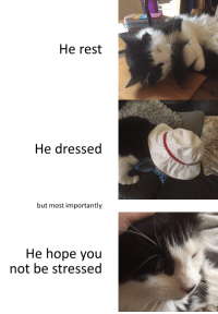 A wholesome message from my fluffboi Sirius.: He rest  He dressed  but most importantly  He hope you  not be stressed A wholesome message from my fluffboi Sirius.
