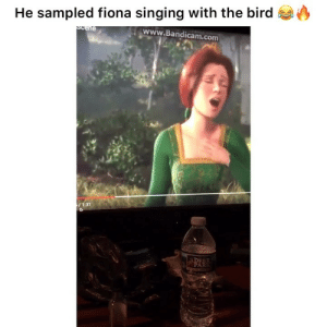 Killed that 👌🏾 👉🏽(via: @drabeats): He sampled fiona singing with the bird  www.Bandicam.com  /1:31 Killed that 👌🏾 👉🏽(via: @drabeats)