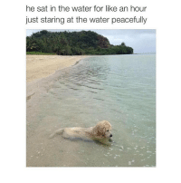 this is too much for me omggggg: he sat in the water for like an hour  just staring at the water peacefully this is too much for me omggggg