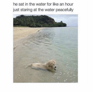 Water, Wholesome, and Sat: he sat in the water for like an hour  just staring at the water peacefully feel like this is the epitome of wholesome