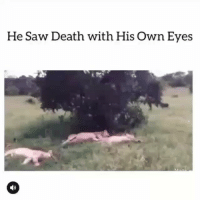 Funny, Saw, and Wtf: He Saw Death with His Own Eyes Wtf clip of the day 😂💀