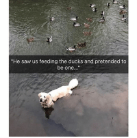 """Memes, Saw, and Ducks: """"He saw us feeding the ducks and pretended to  be one..."""" Perhaps the smartest dog ever. @drsmashlove posting hilarious doggo memes."""