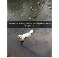 """Saw, Ducks, and Working: """"He saw us feeding the ducks and pretended to  be one..."""" <p>It seems like it's working..</p>"""