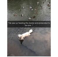 """Saw, Ducks, and One: """"He saw us feeding the ducks and pretended to  be one..."""""""