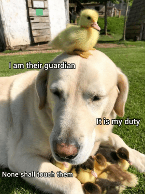 He shall protect them: He shall protect them