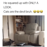 Bruh, Cats, and Memes: He squared up with ONLY A  LOOK  Cats are the devil bruh. (j) 😂The cat looks possessed