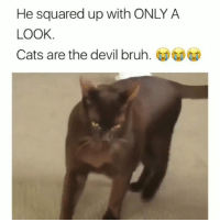😂😂😂 Gangsta cat.. funniest15 viralcypher funniest15seconds Www.viralcypher.com: He squared up with ONLY A  LOOK  Cats are the devil bruh. 😂😂😂 Gangsta cat.. funniest15 viralcypher funniest15seconds Www.viralcypher.com