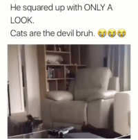 Cats Or Dogs ? 👇: He squared up with ONLY A  LOOK  Cats are the devil bruh.凶凶 Cats Or Dogs ? 👇