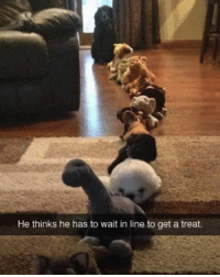 Follow me @antisocialtv @lola_the_ladypug @x__social_butterfly__x @x__antisocial_butterfly__x: He thinks he has to wait in line to get a treat. Follow me @antisocialtv @lola_the_ladypug @x__social_butterfly__x @x__antisocial_butterfly__x