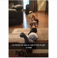 Memes, Ted, and Animal: He thinks he has to wait in line to get  a treat Gonna be a long wait... @hilarious.ted has the best animal memes.