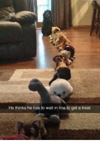 Get, Treat, and Wait: He thinks he has to wait in line to get a treat