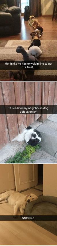 Anaconda, Target, and Tumblr: He thinks  he has to wait in line to get  a treat   This is how my neighbours dog  gets attention   $100 bed. animalsnaps:Dog snaps