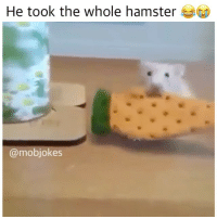 Memes, Hamster, and Nature: He took the whole hamster  @mobjokes That lil rat thingy just got ate, damn nature you scary Backup: @bitchpride