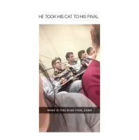Someone give this guy an A+: HE TOOKHIS CAT TO HIS FINAL  WHAT IS THIS IN MY FINAL EXAM Someone give this guy an A+