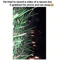 Funny, Phone, and Videos: He tried to record a video of a racoon but  It grabbed his phone and ran away Lmfaooo