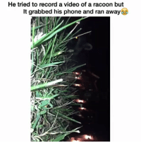 Funny, Lmao, and Lol: He tried to record a video of a racoon but  It grabbed his phone and ran away Lmao sucks for him lol hoodclips comedy HoodComedy