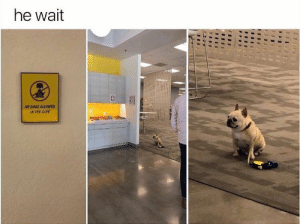 Animals, Dogs, and Memes: he wait  NO DOGS ALLOWED  IN THE CAFE Dog Memes Of The Day 32 Pics – Ep51 #animalmemes #dogmemes #memes - Lovely Animals World