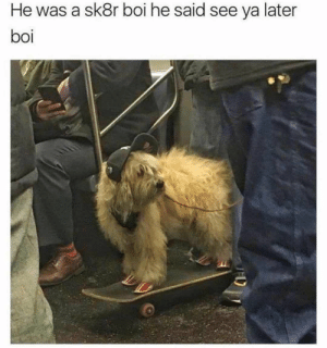 Animals, Dogs, and Memes: He was a sk8r boi he said see ya later  boi Dog Memes Of The Day 30 Pics – Ep53 #animalmemes #dogmemes #memes #dogs - Lovely Animals World