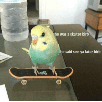 See,  Later, and  Said: he was a skater birb  he said see ya later birb