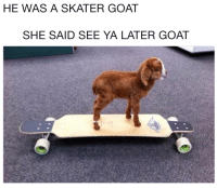Goat, She, and She Said: HE WAS A SKATER GOAT  SHE SAID SEE YA LATER GOAT
