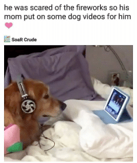 Memes, Videos, and Best: he was scared of the fireworks so his  mom put on some dog videos for him  SoaR Crude Best thing I've seen all day. | Follow @aranjevi for more!