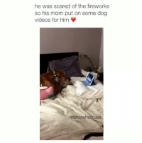 Dogs, Moms, and Omg: he was scared of the fireworks  so his mom put on some dog  videos for him  relationshi  usa omg