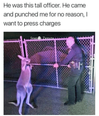 Memes, Snitch, and Stitches: He was this tall officer. He came  and punched me for no reason, l  want to press charges  Snap Snitches get stitches kangaroo jack. You were clearly the aggressor now you telling. Where is crocodile dundee when you need him